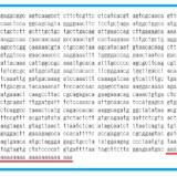 「ゲノムの最後にaが33個あるのは新型コロナウイルスが人工的に作られたから」の嘘